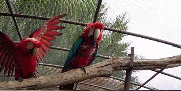 papagáj tartás